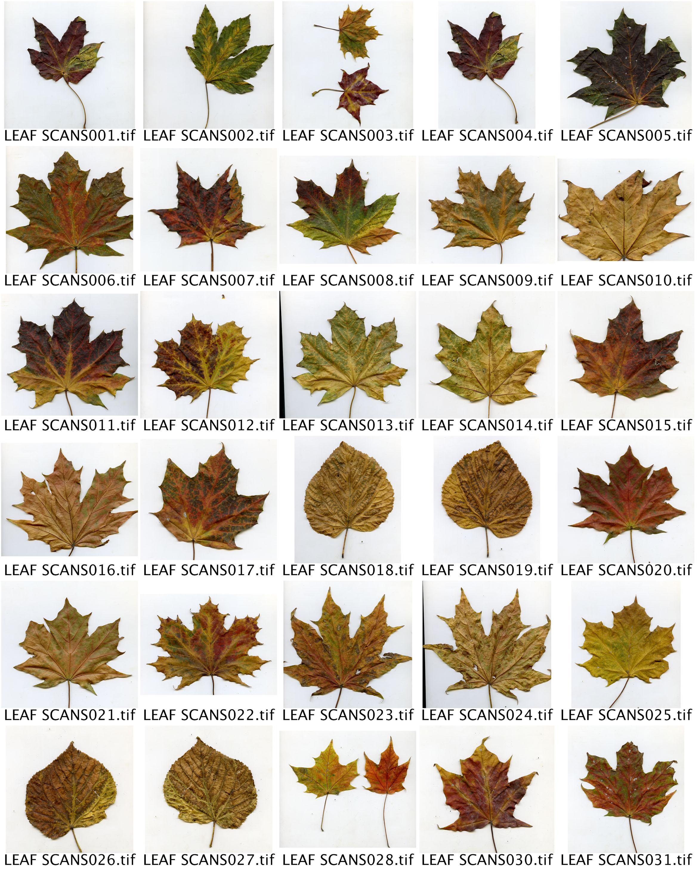 ContactSheet leaf scans.jpg