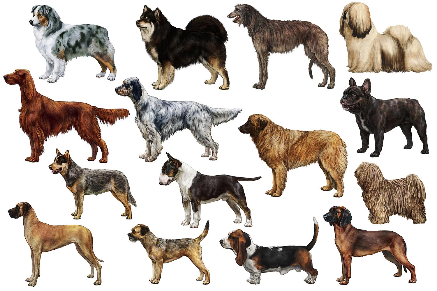 Breed Illustrations
