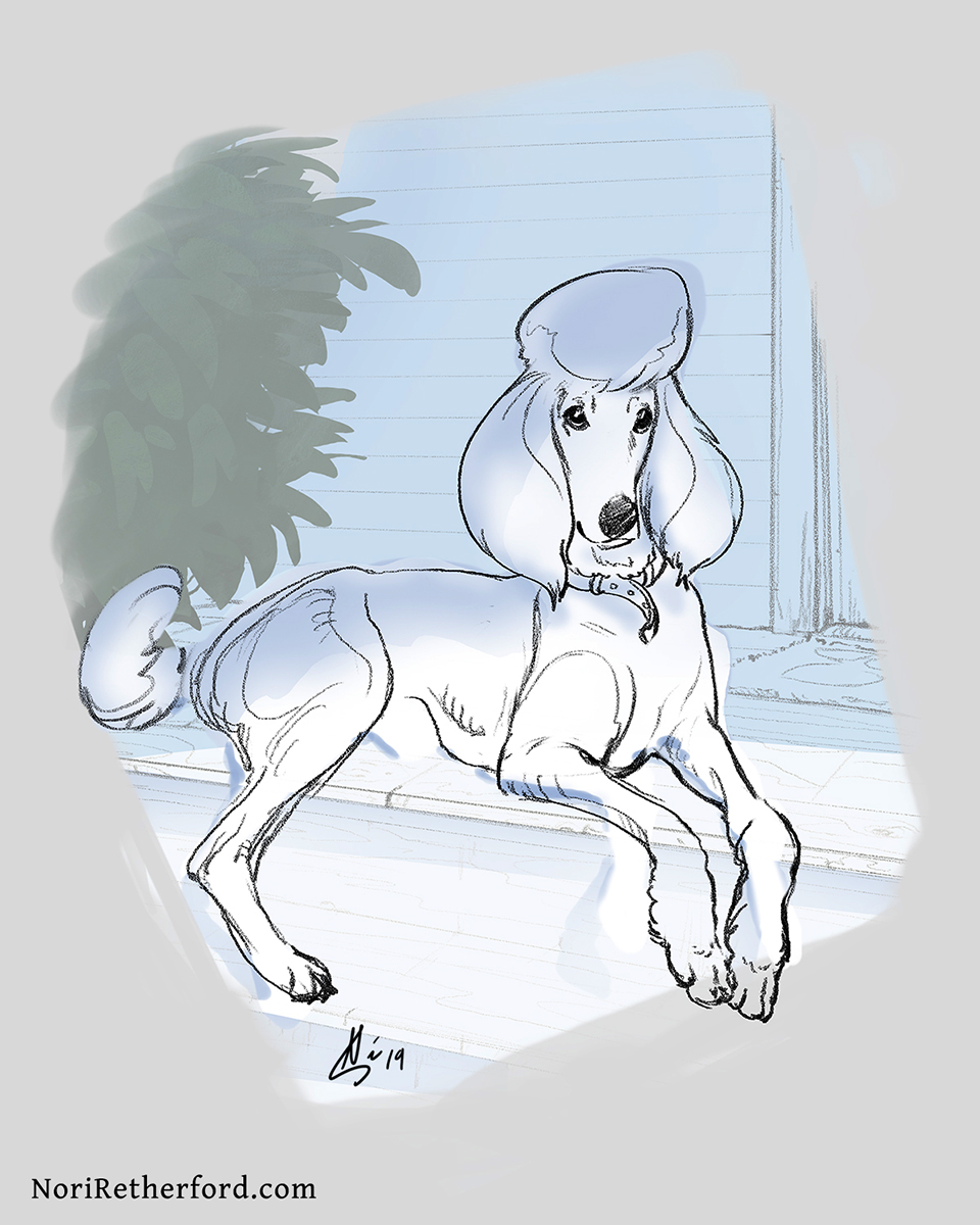 in progress portrait of a standard poodle (2019)