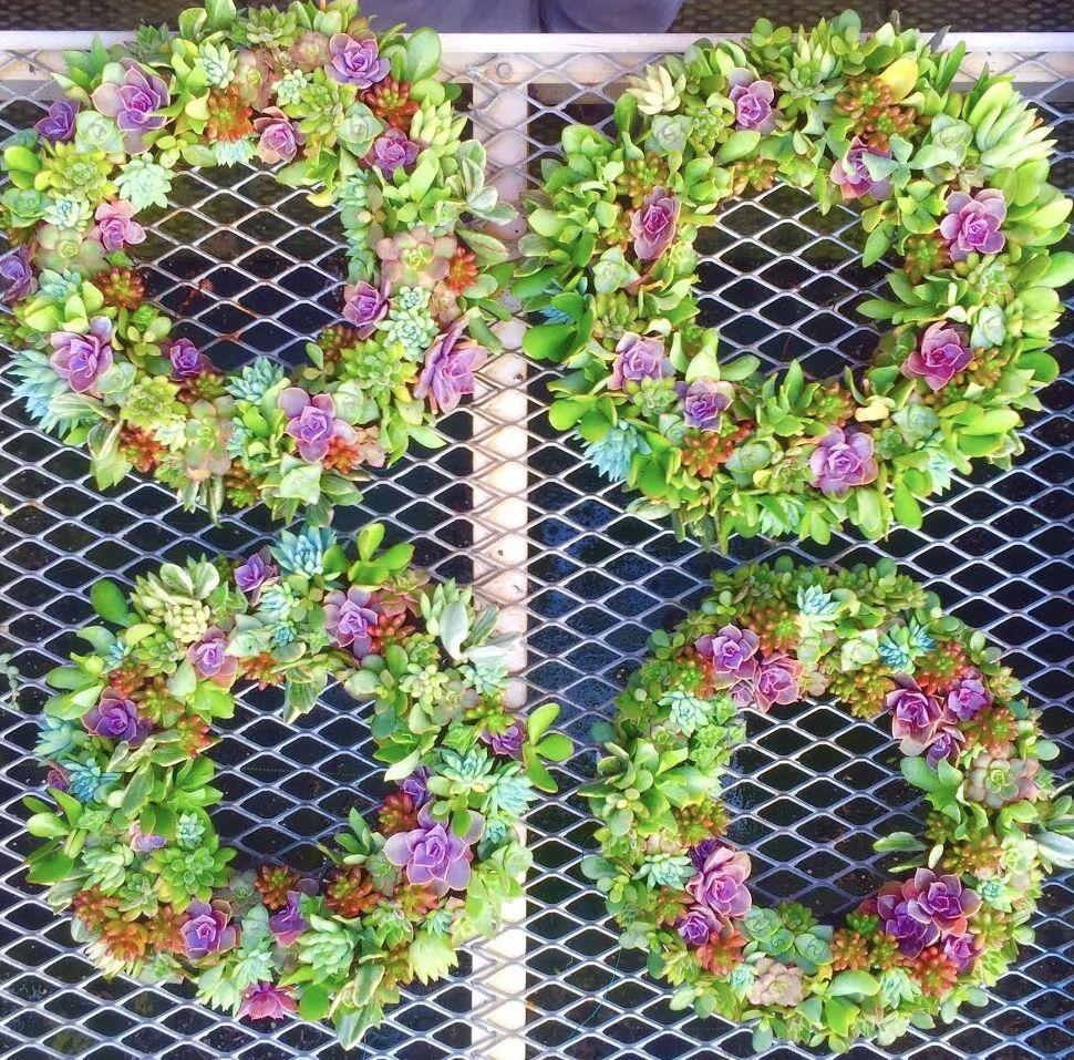 wreath wall of succulent.jpg