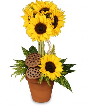 sunflower pot o topiary.jpg