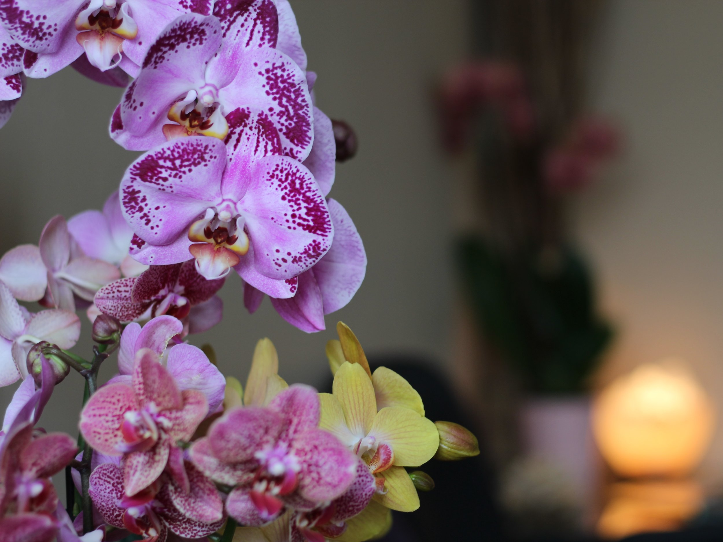 OUR CENTER ORCHIDS.jpg