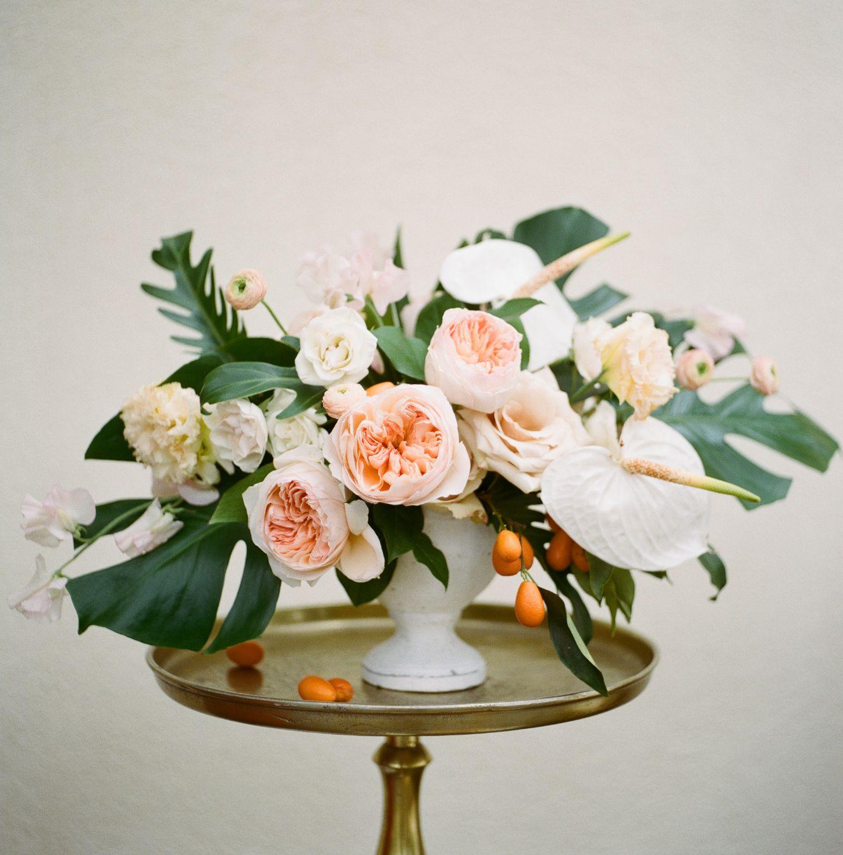 roger-williams-park-botanical-tropical-peach-daylynn-designs027.jpg