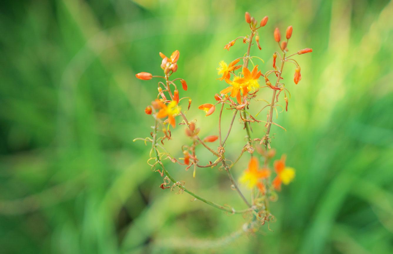 flowers-in-bonita-terraces.jpg