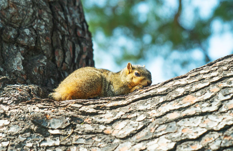 squirrel-on-top-of-tree.jpg