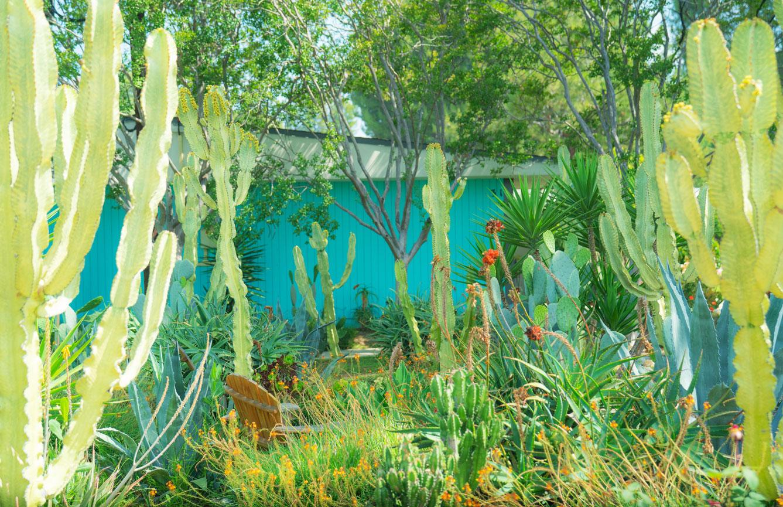 garden-image-1.jpg