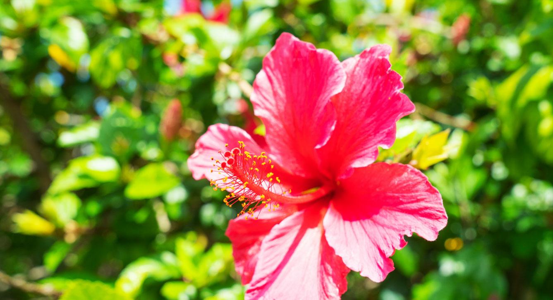 garden-image-3.jpg