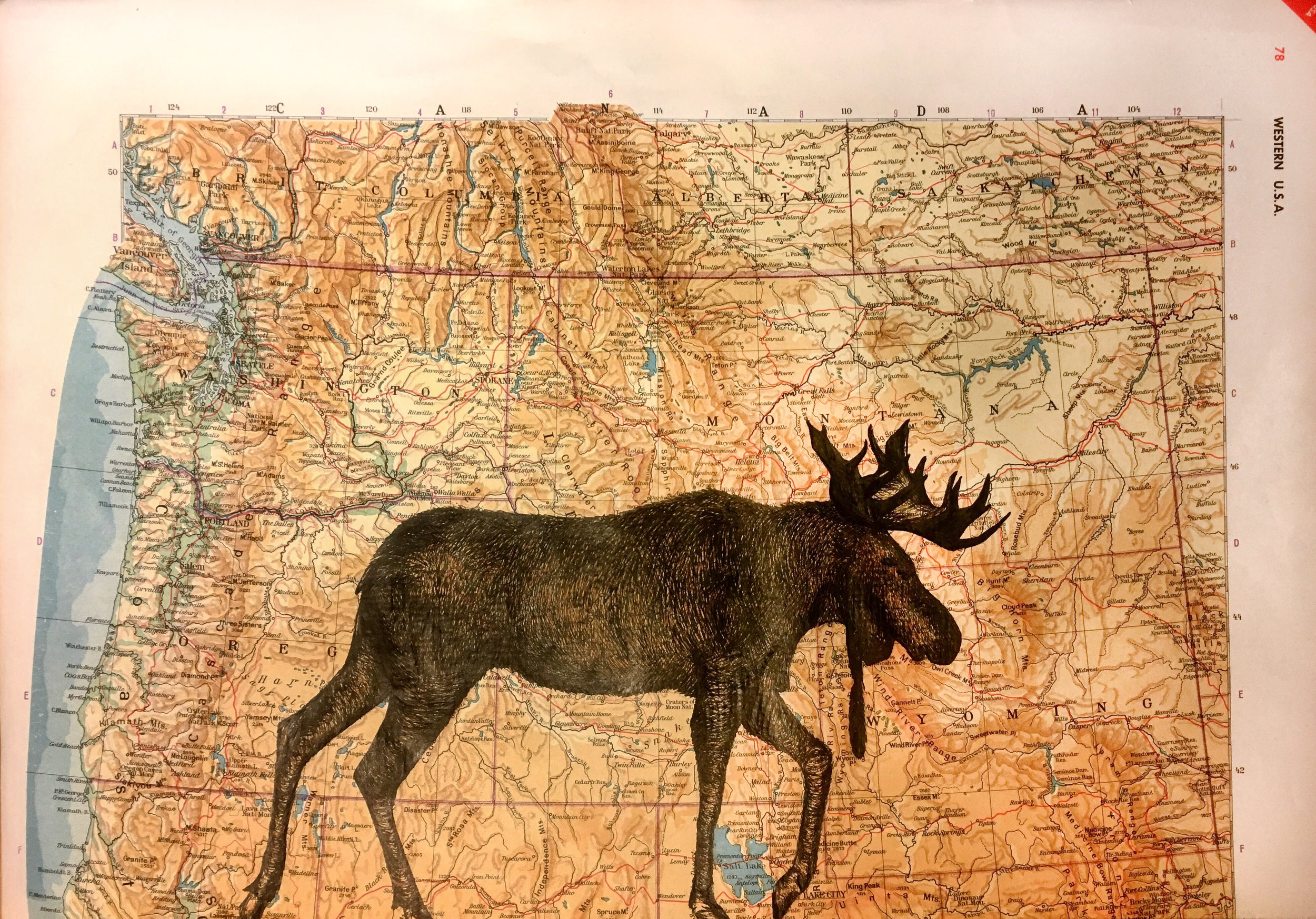 moose-2.jpg