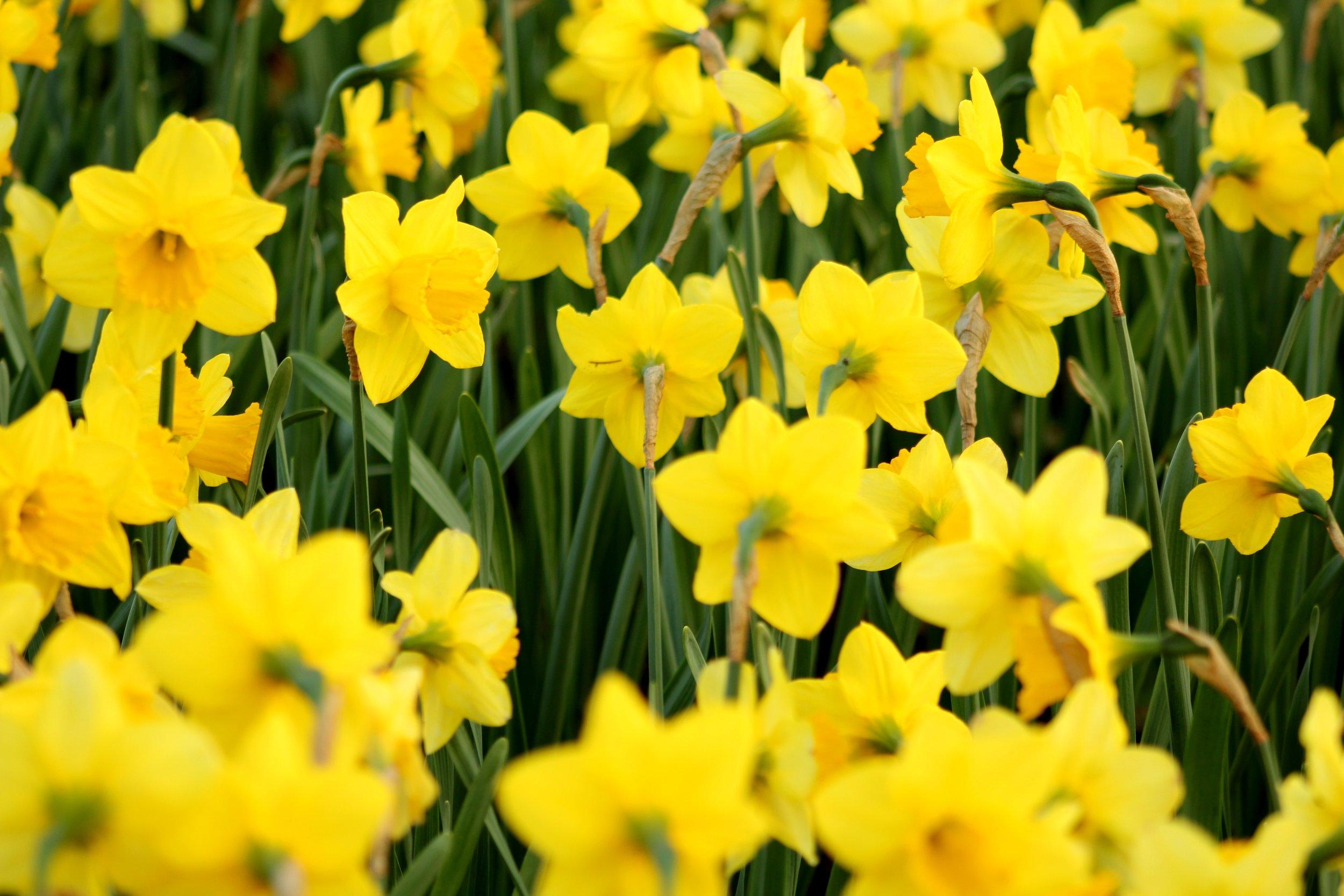 beautiful-bloom-blooming-1021906.jpg