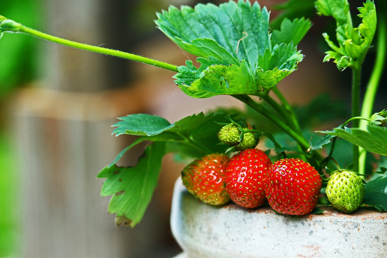 strawberries-4284068_1280.jpg