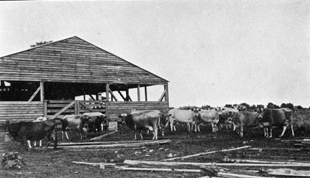 mccullers_wh_dairyherd_1909_14564566744_o.jpg