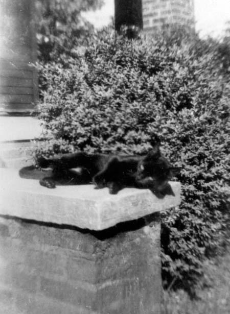 blackcat_porch_c1920s_14379690797_o.jpg