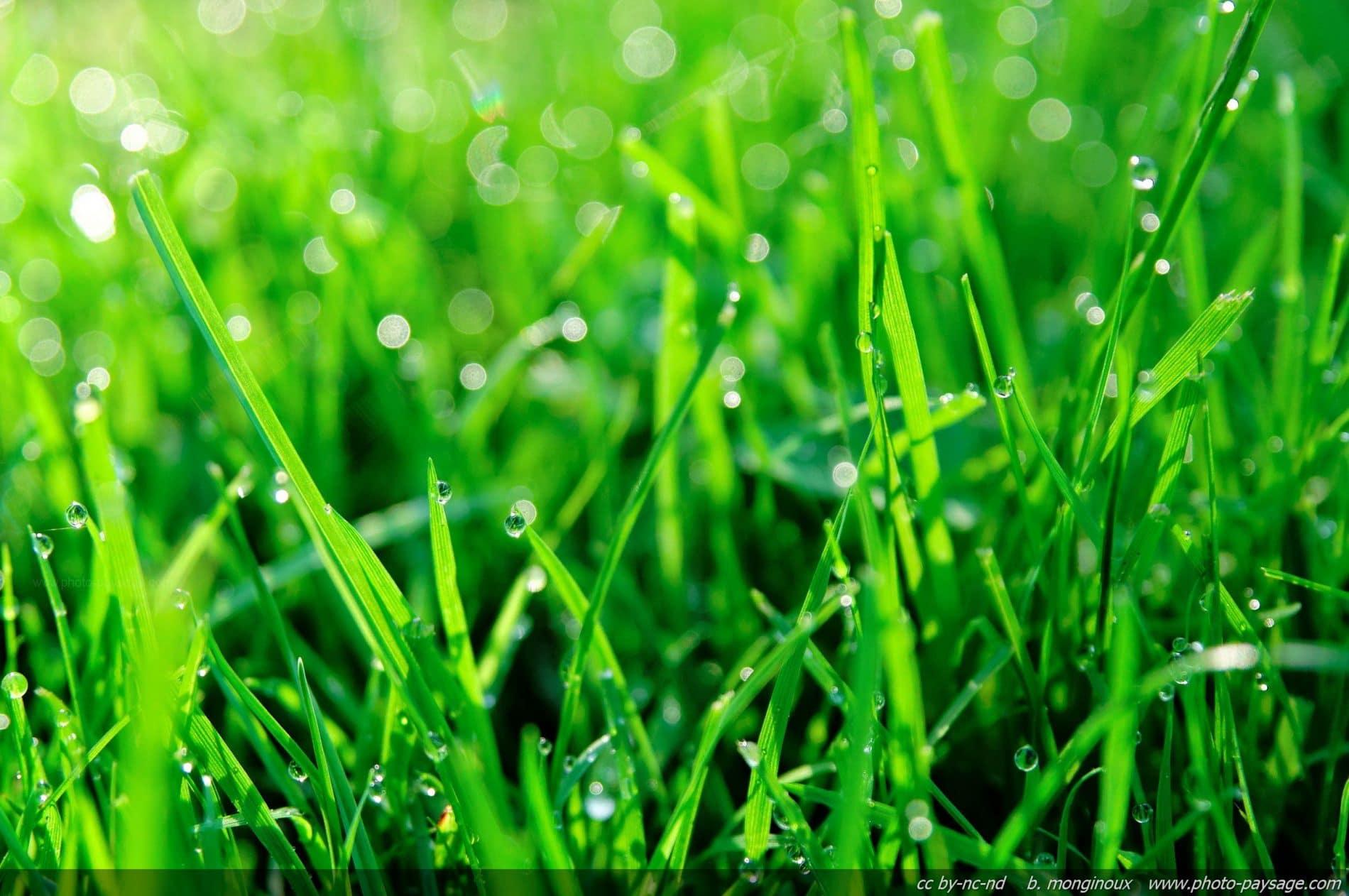 Grass Pic.jpg