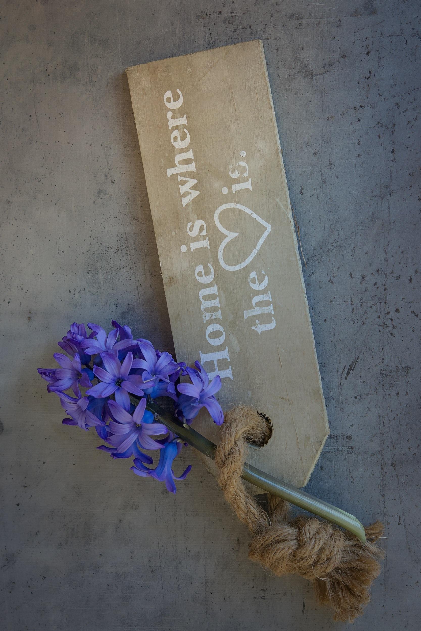 flowers-frame-hyacinth-161001.jpg