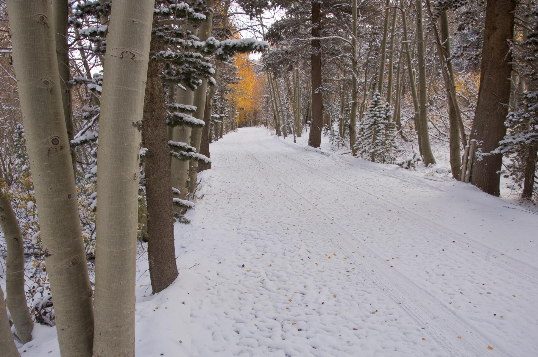 Eastern Sierra 2008-0159.jpg