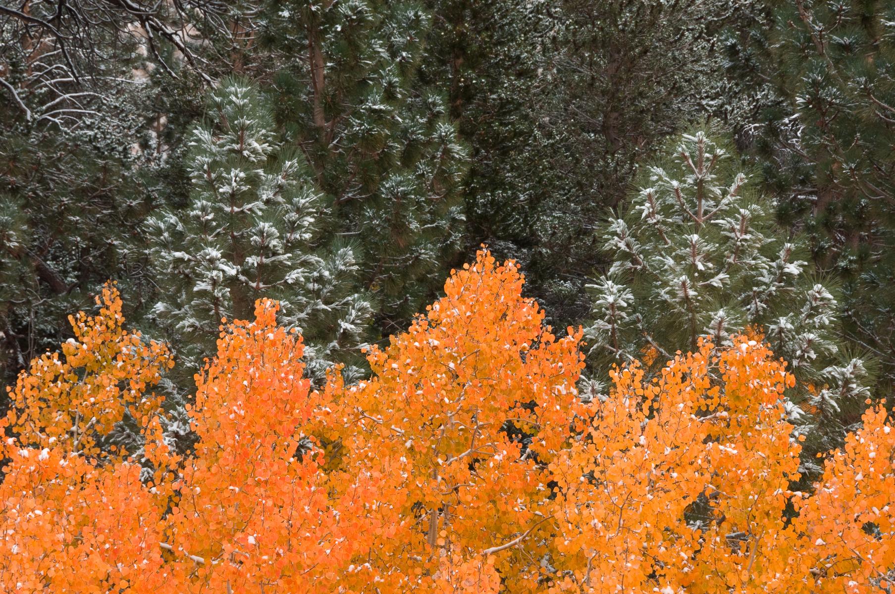 Eastern Sierra 2008-0136.jpg