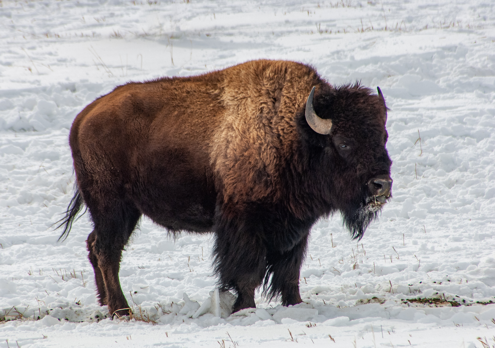 National Elk Refuge 2007-0746.jpg