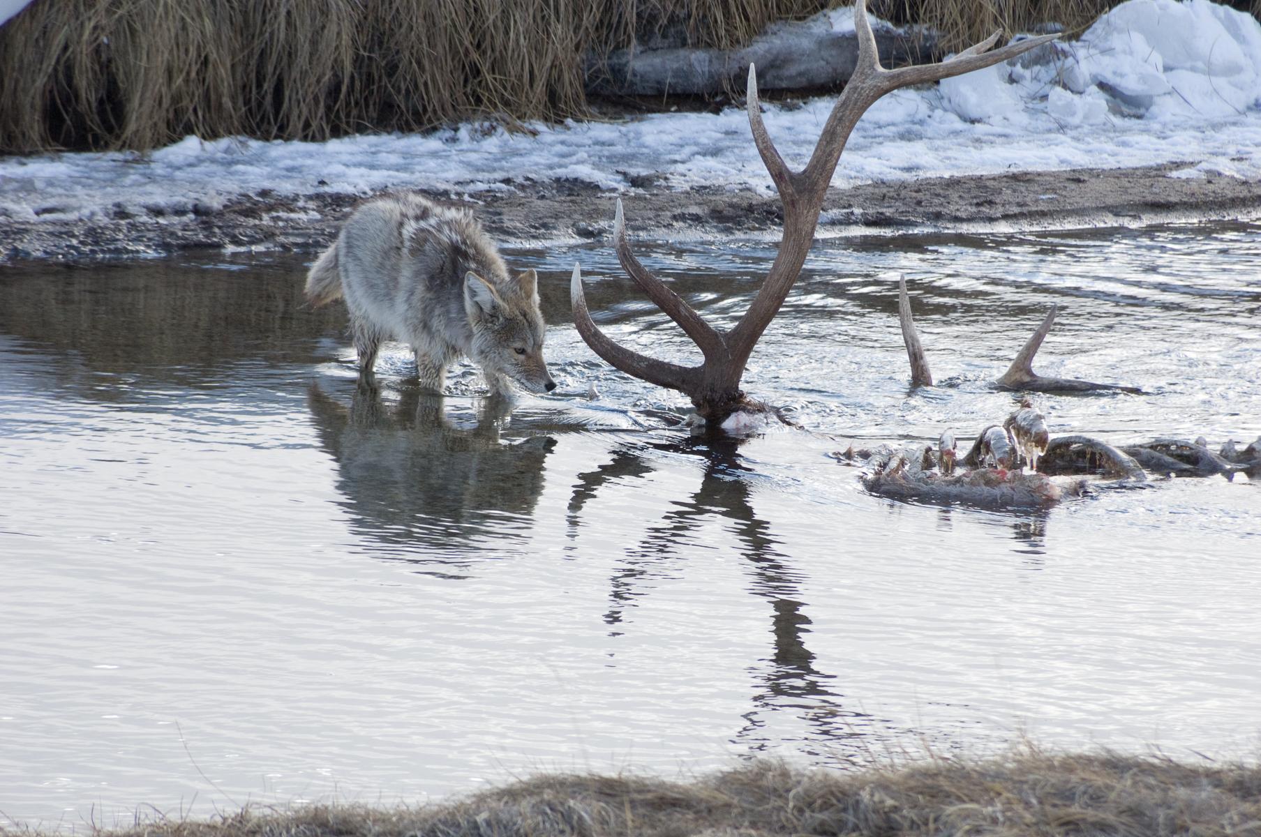 National Elk Refuge 2007-0034.jpg