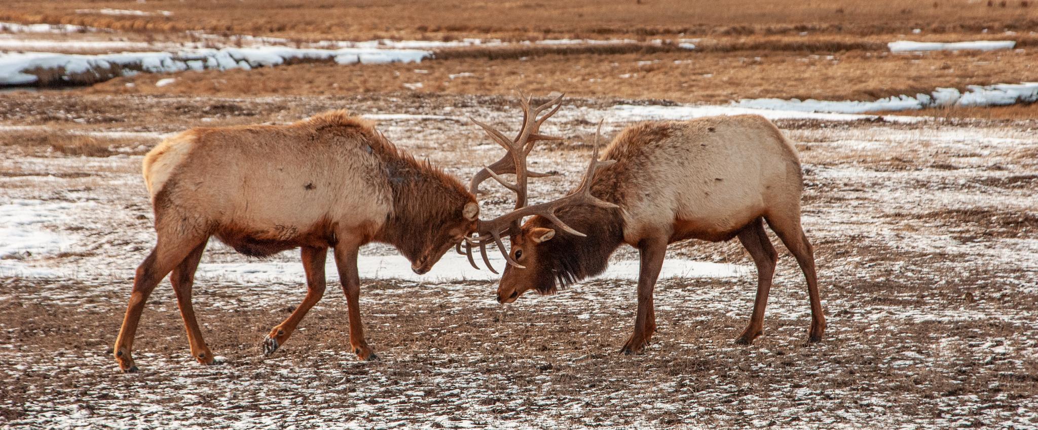 National Elk Refuge 2007-0097.jpg