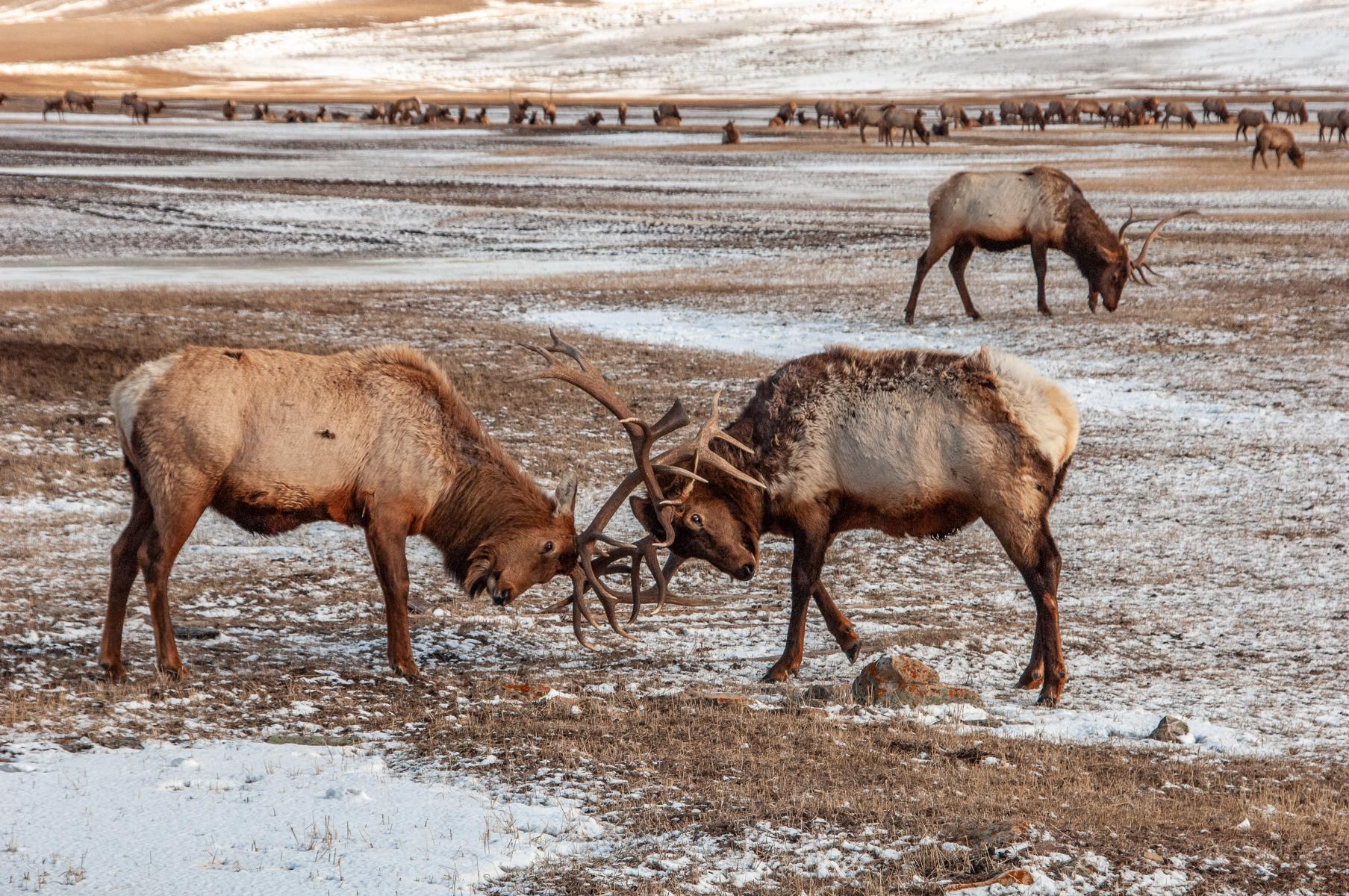 National Elk Refuge 2007-0164.jpg