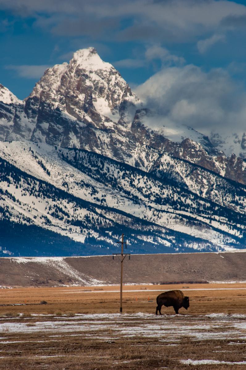 National Elk Refuge 2007-0717.jpg
