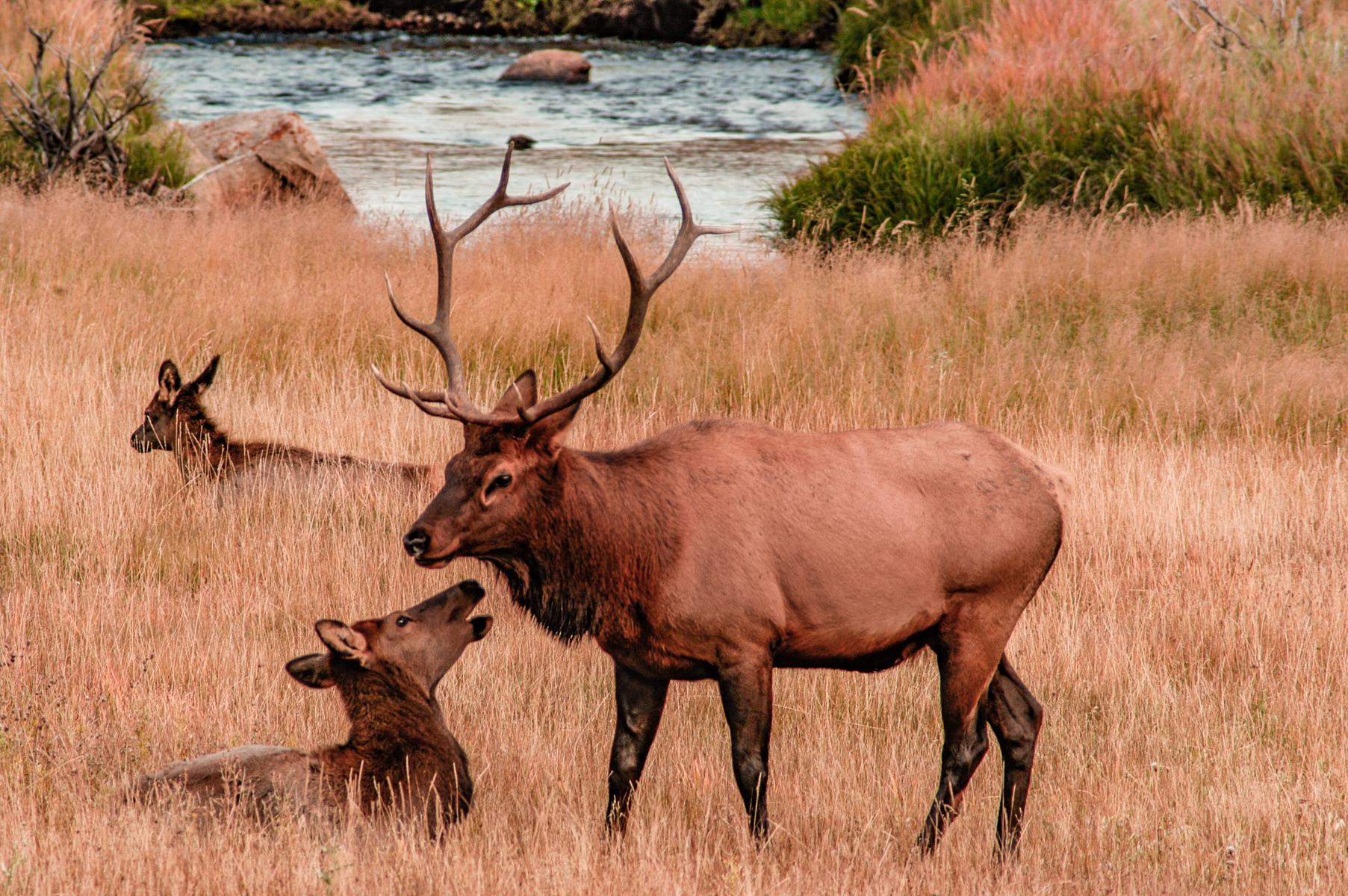 Rocky Mountain Park 2005-0244.jpg
