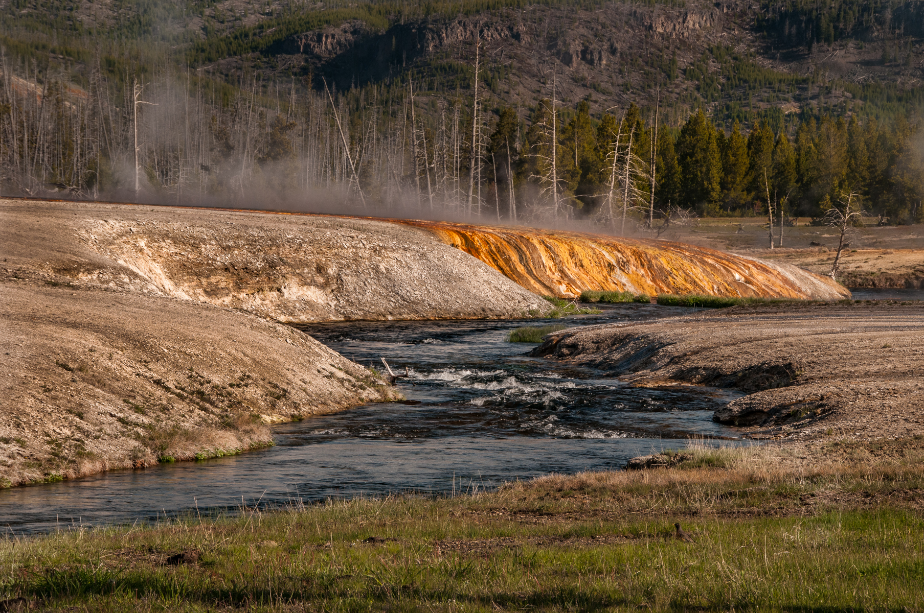 Yellowstone 2010-1755.jpg