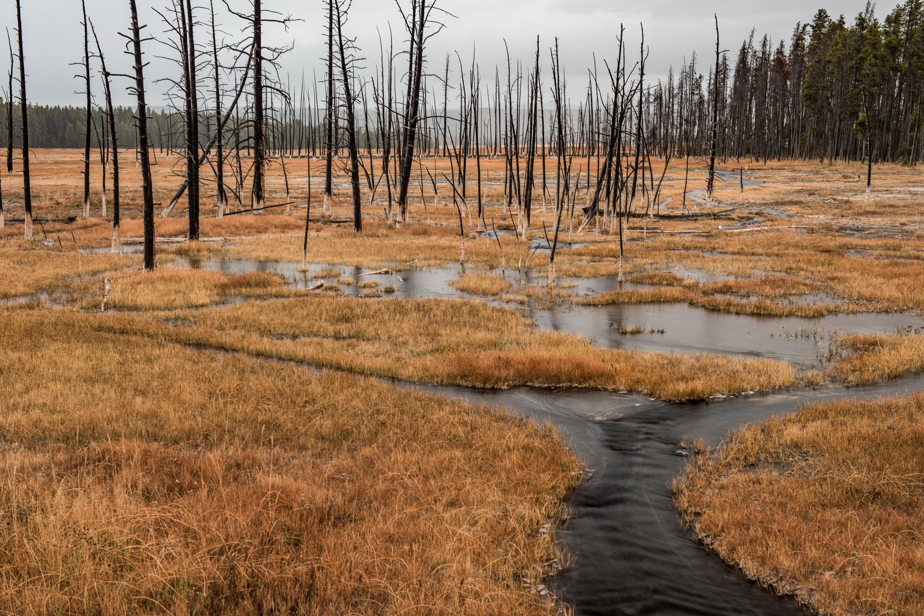 Yellowstone 2012-00008.jpg