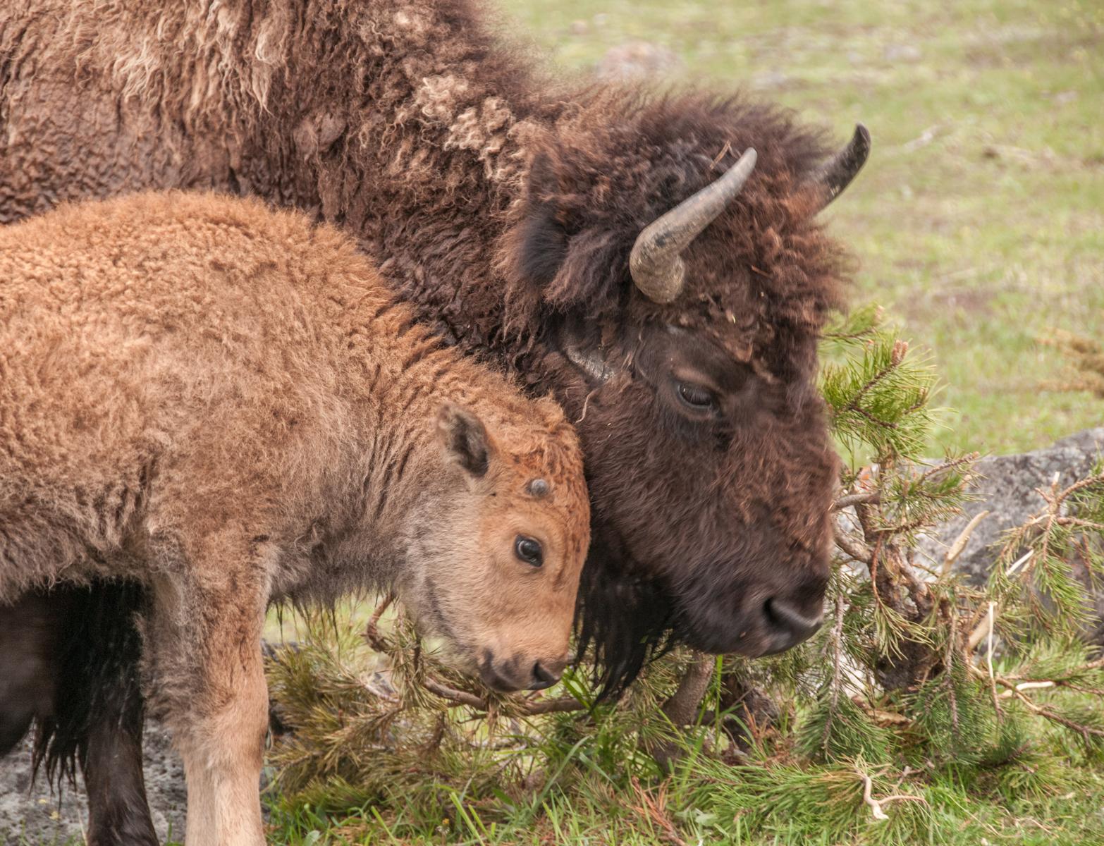Yellowstone 2010-0584.jpg