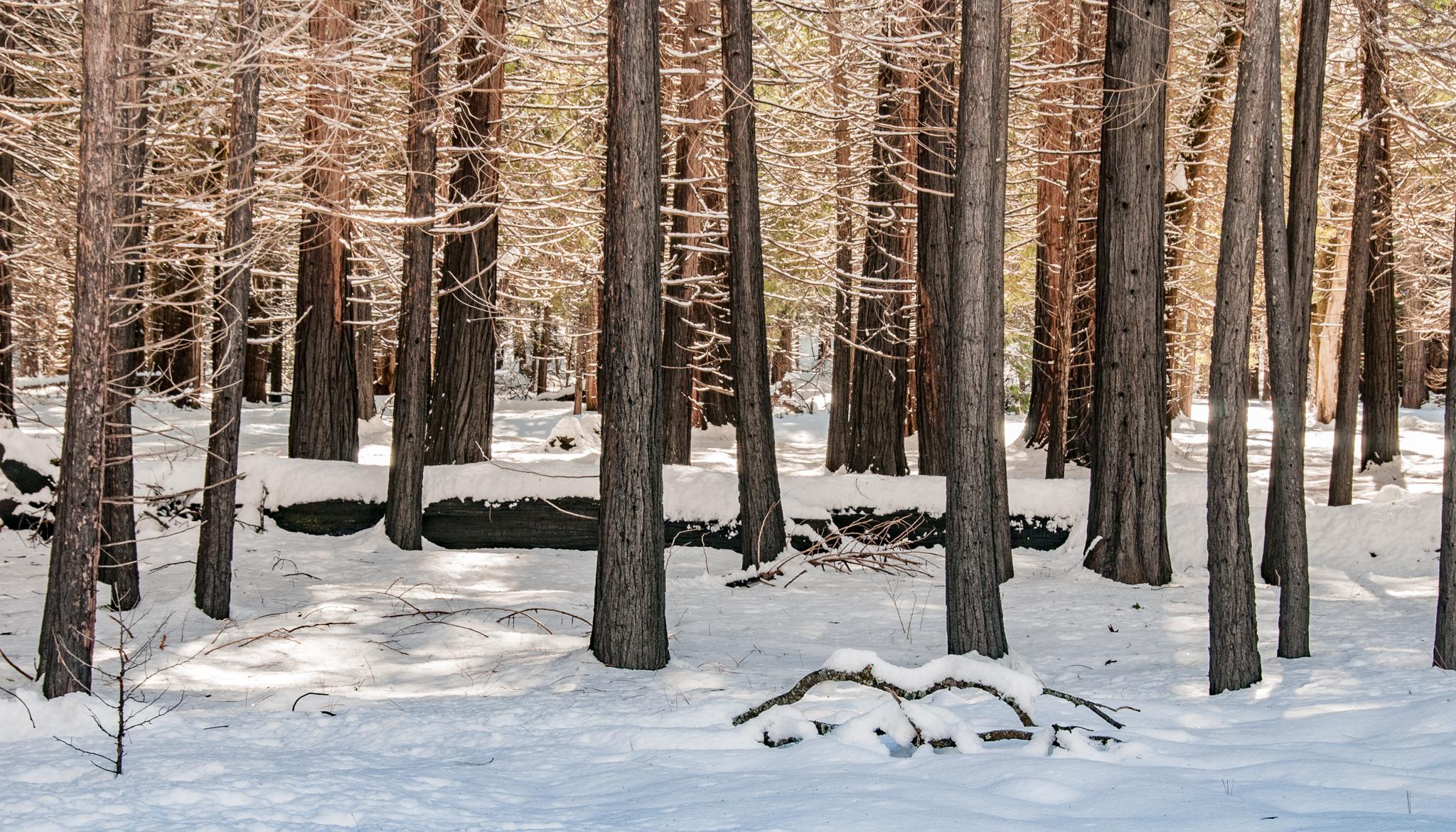 Yosemite 2011-00222.jpg