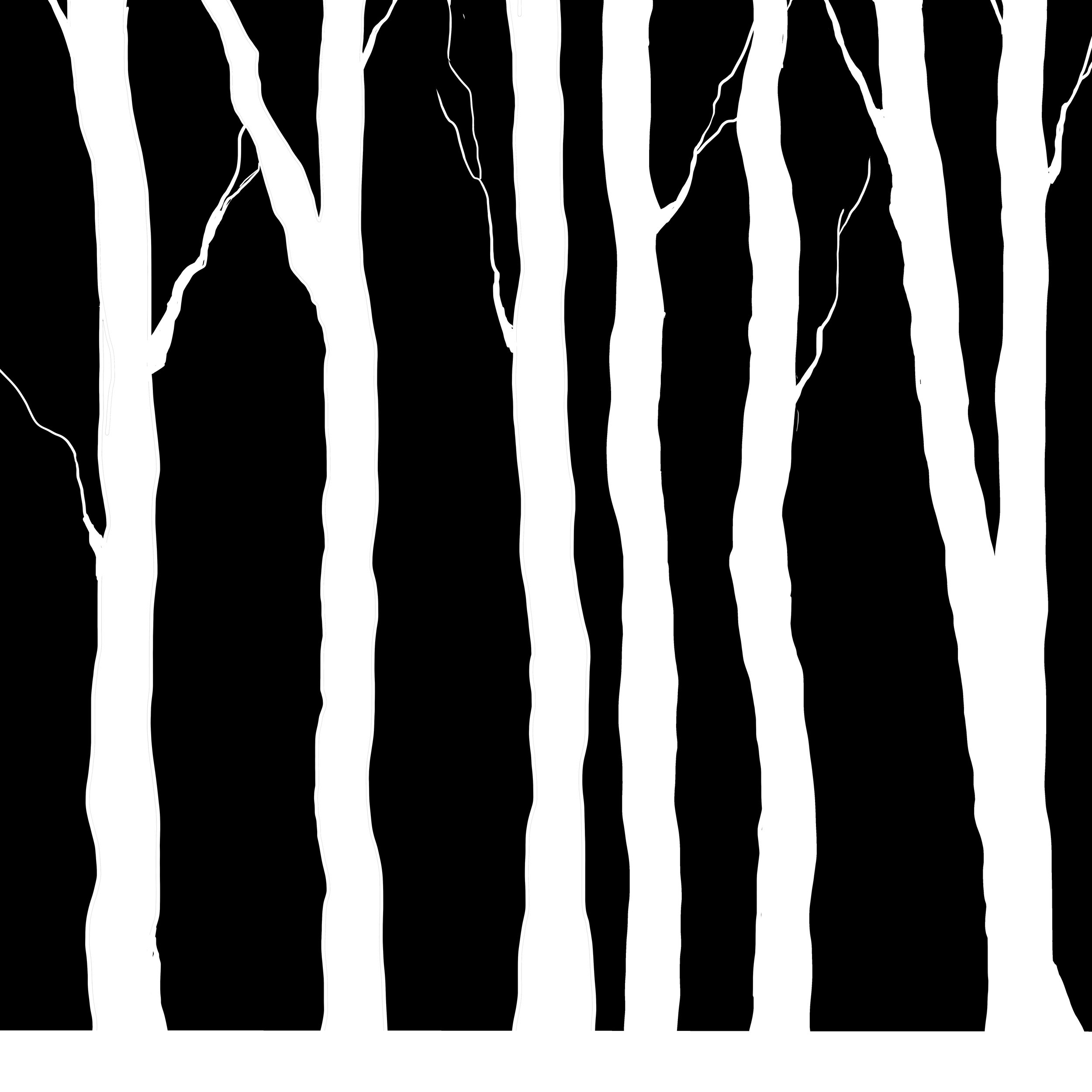 Birch Trees for Set