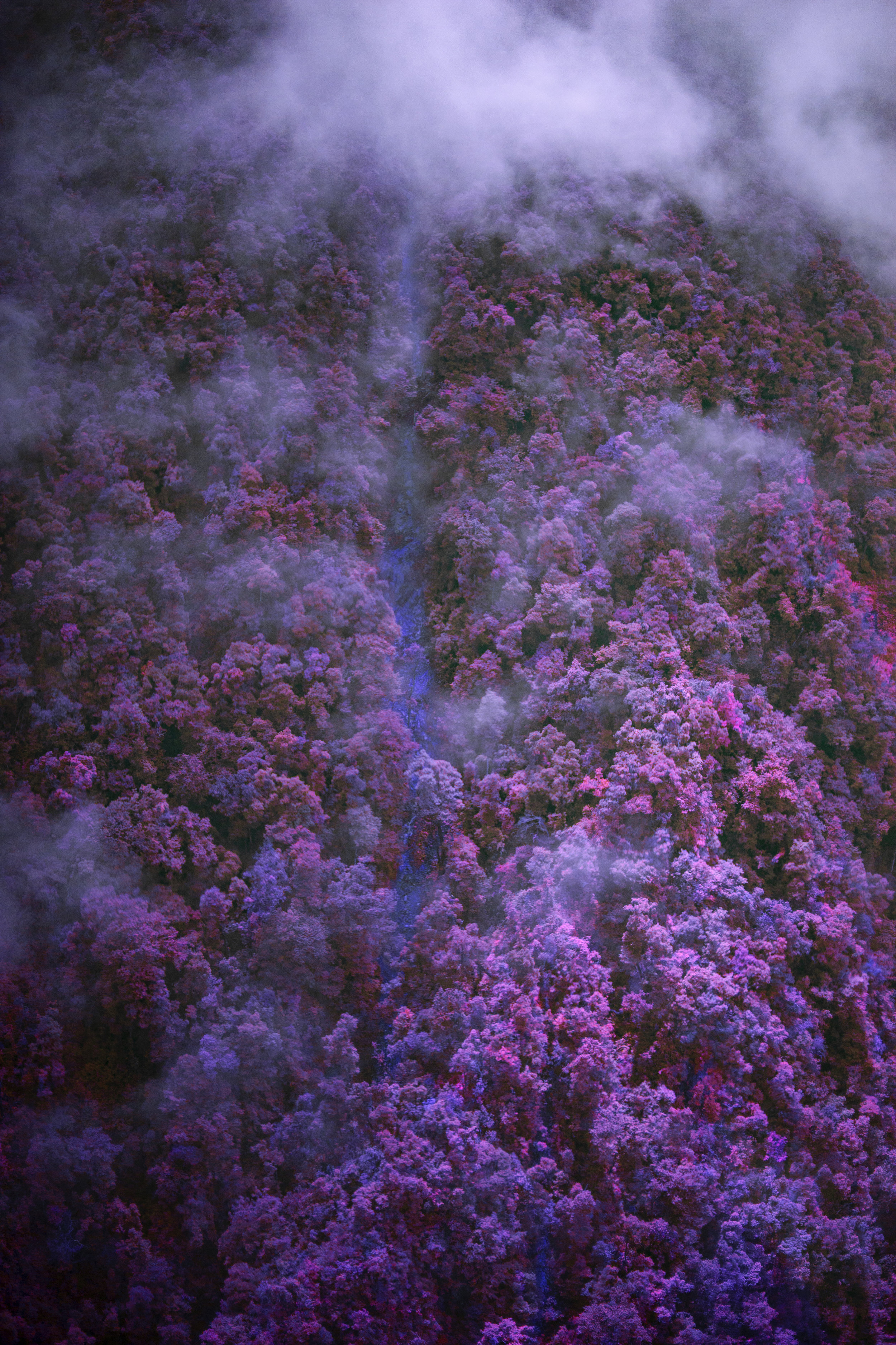 PURPLE.FOREST-A.jpg