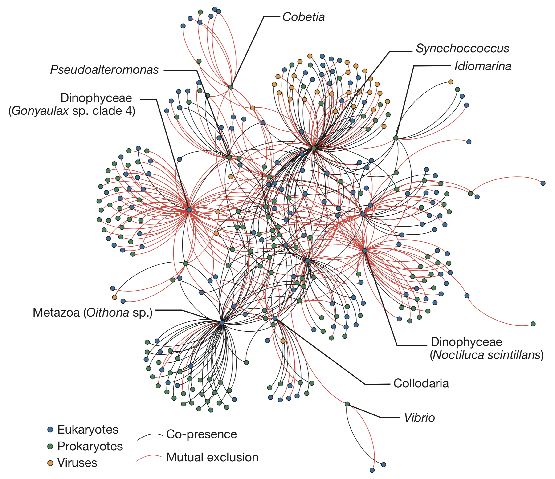 Visualisation of a plankton community network built from eukaryotic, prokaryotic and viral subnetworks and their relationship with carbon export (from    Guidi et al. Nature, 2016   ).