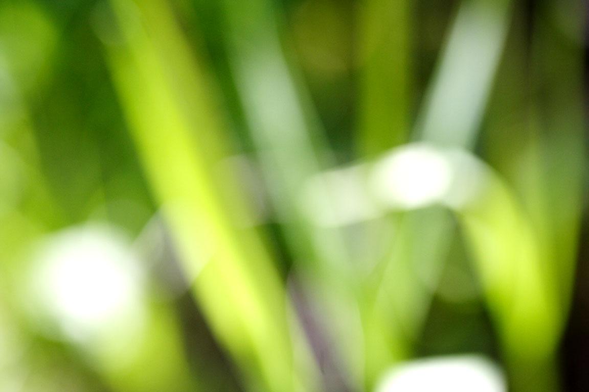 IMG_0122p.jpg