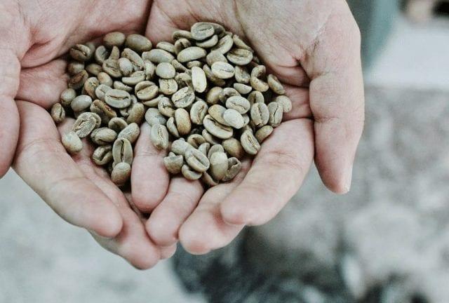 Como sucede con todos los productos naturales, la humedad en el café es un elemento importante y decisivo en su calidad final -