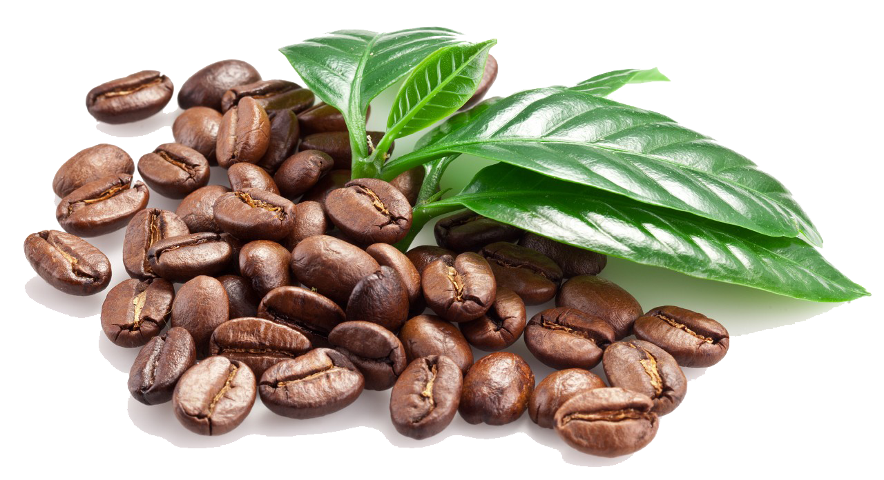 Download-Coffee-Beans-PNG-Image.png