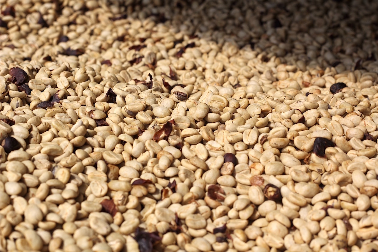 coffee_drying_in_parchment.jpg