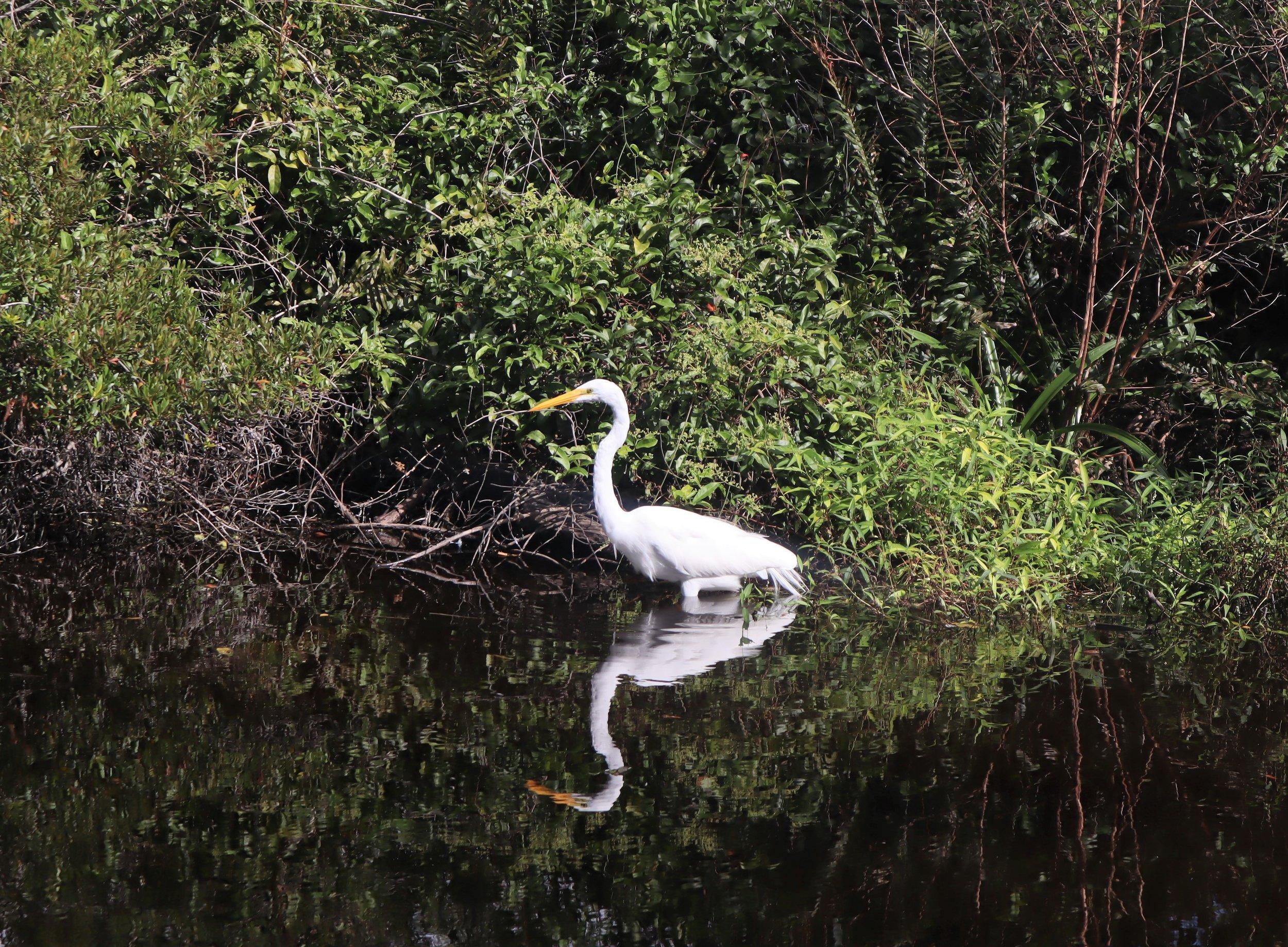 HSR_Florida19.JPG