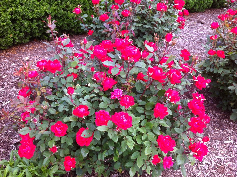 Peotone, Illinois top quality plant care