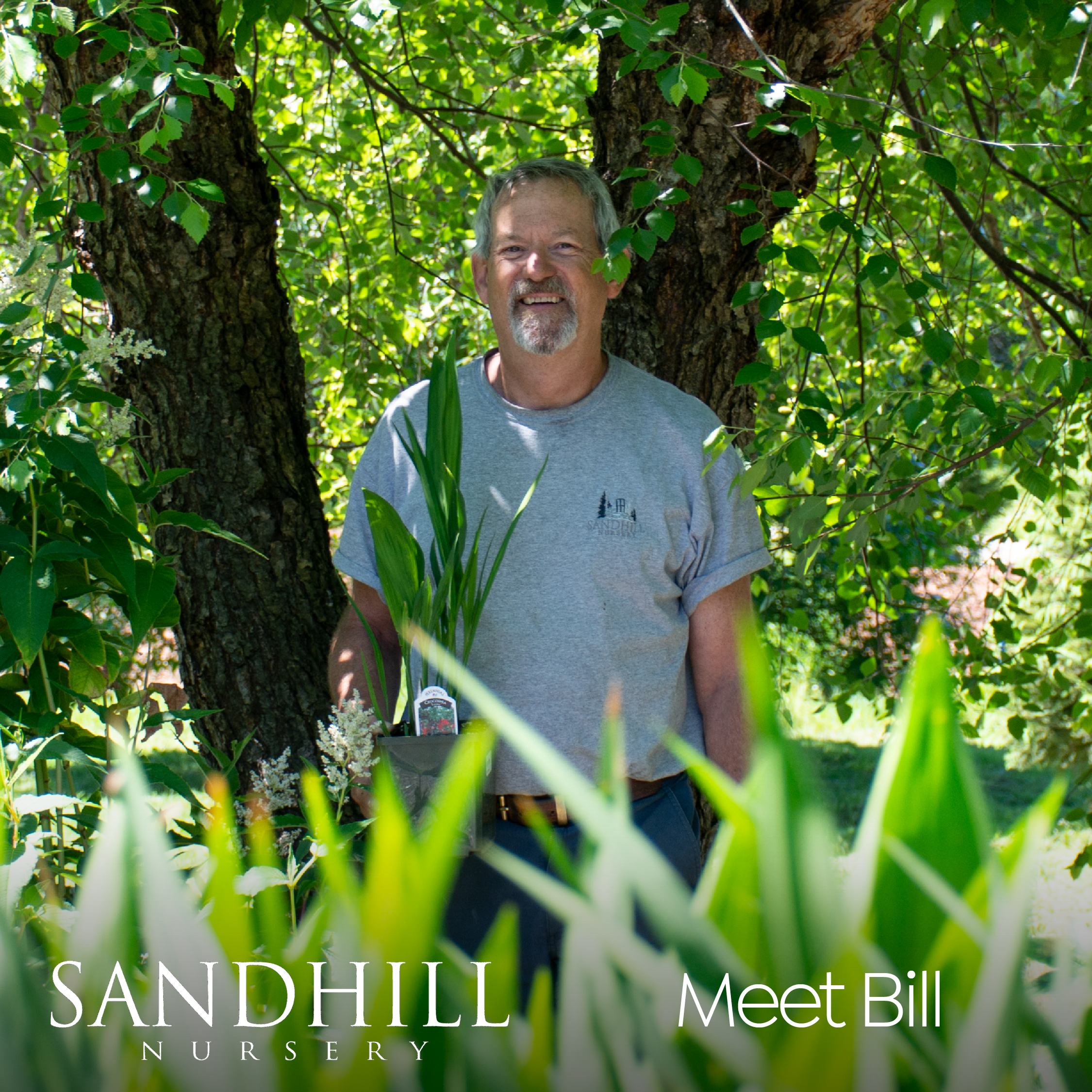 For Sandhill staff, gardening advice comings naturally. Bill has been at the nursery for a few years now and has a passion for veggie gardens. Look for his friendly face for all your queries, from tomato troubles to perennial problems.
