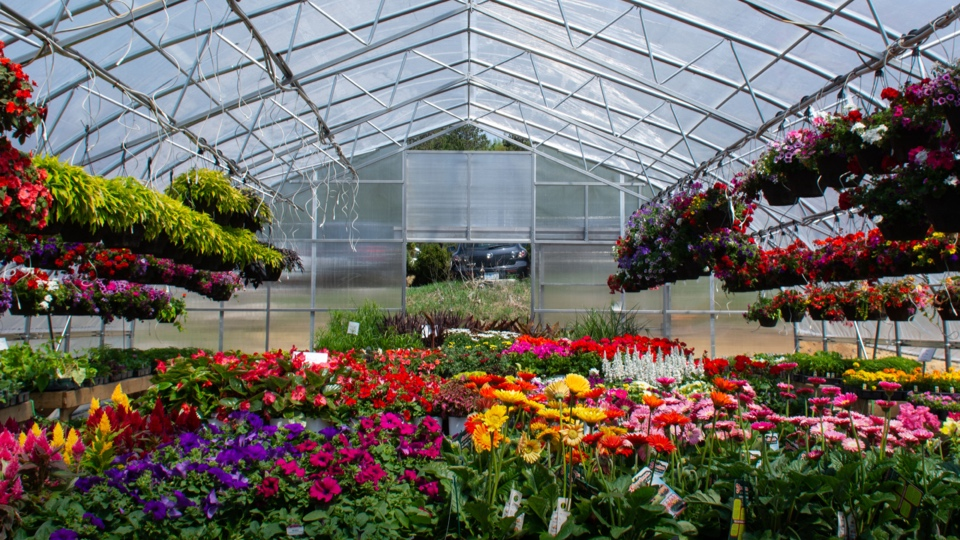 Annuals - We must admit, our greenhouses are the main attraction! They are continually stocked with an abundance of annual flowers. We offer an enormous variety of hanging baskets, planters, and bedding plants for all types of growing conditions.