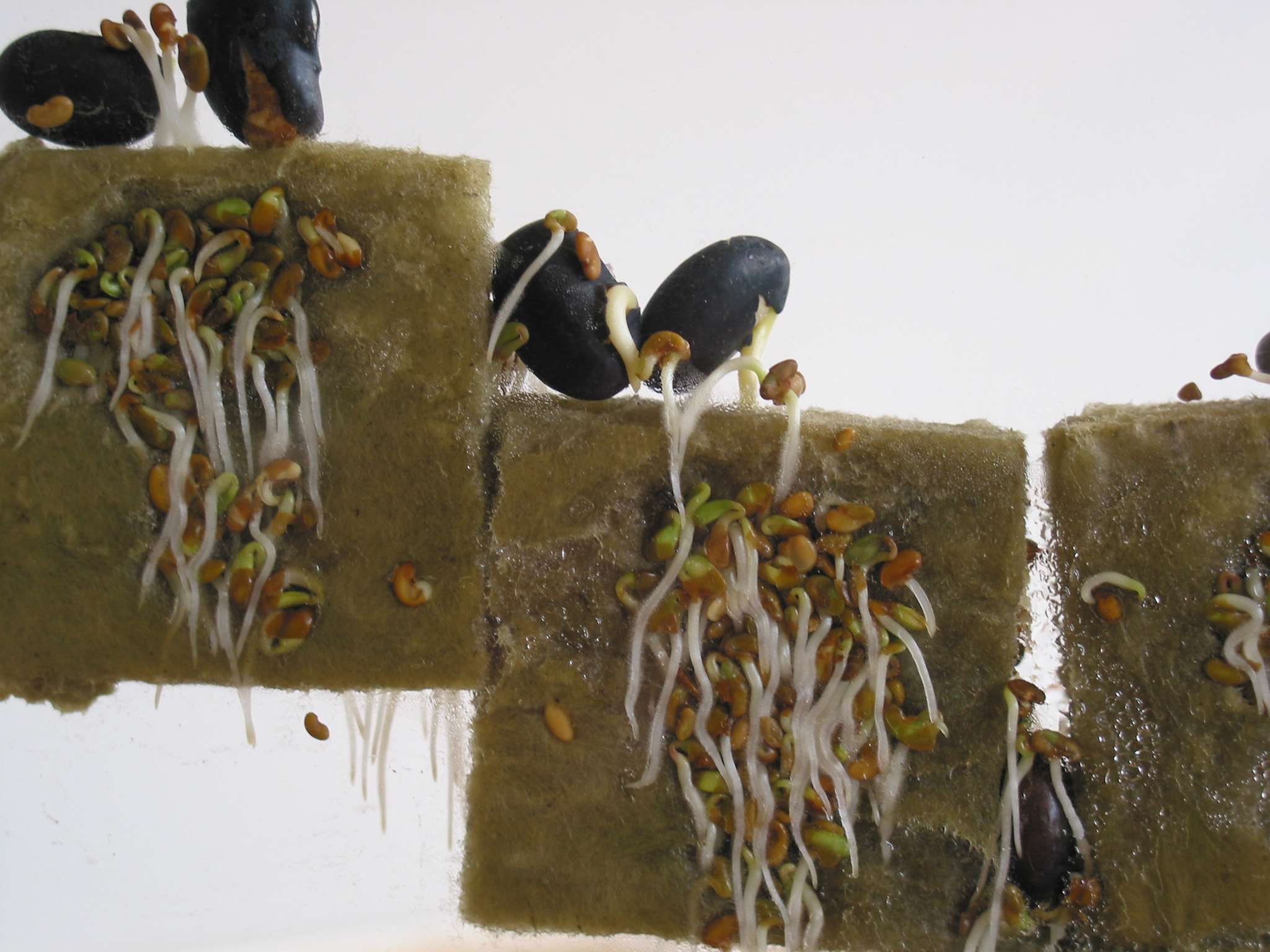 Ant Farm, 2001