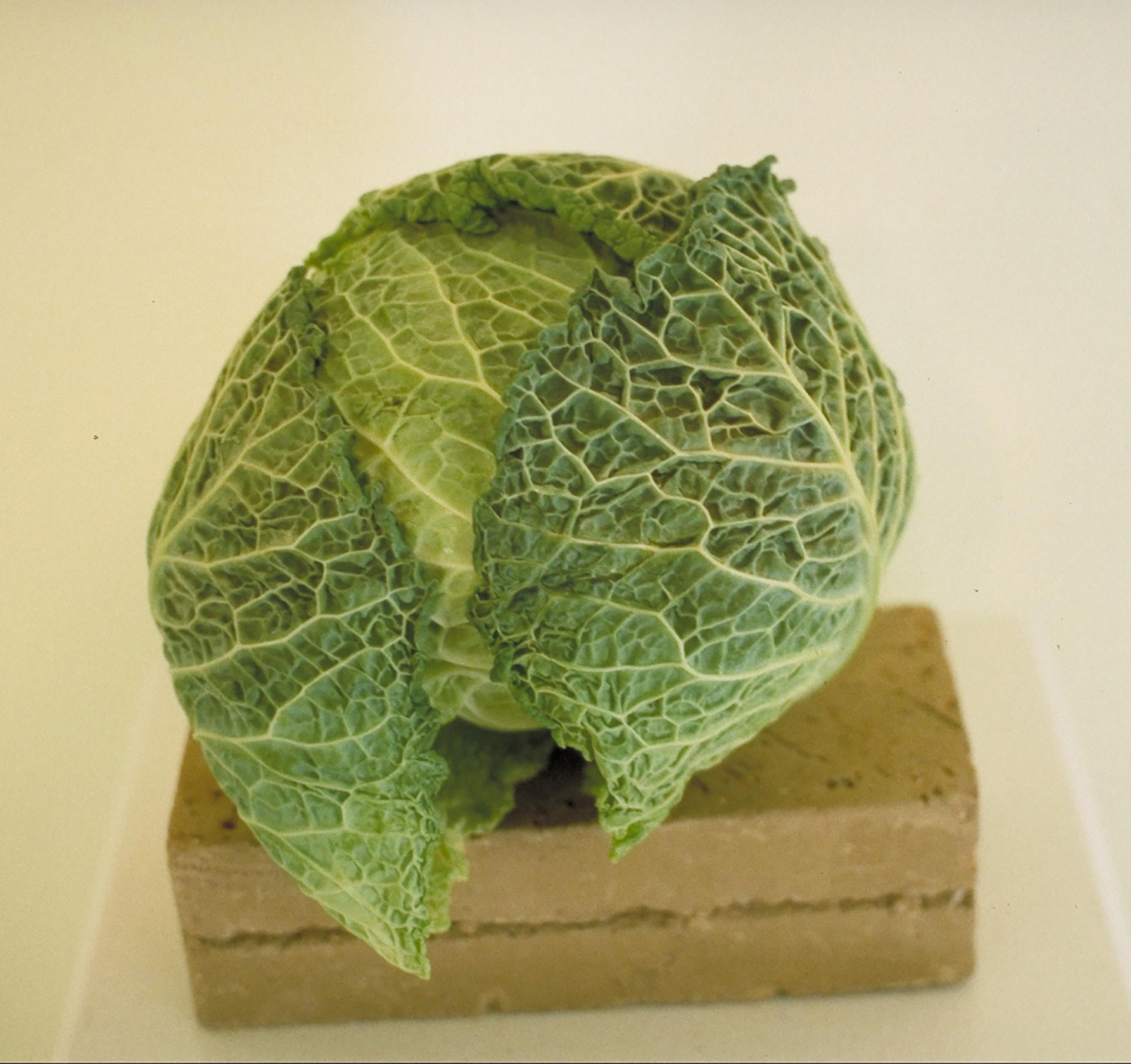 Cabbage, 2001