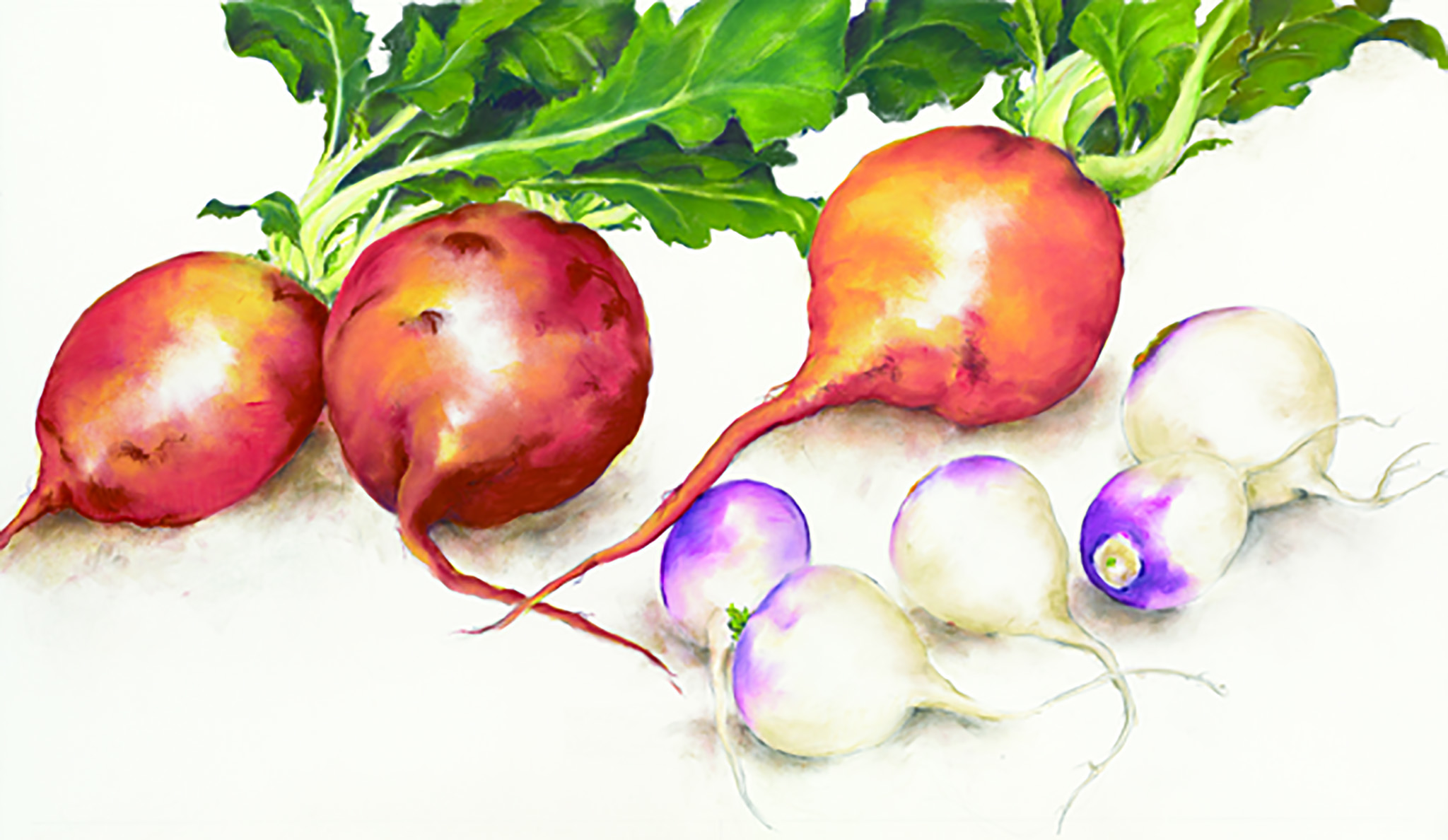 Gold Beet and Baby Turnip
