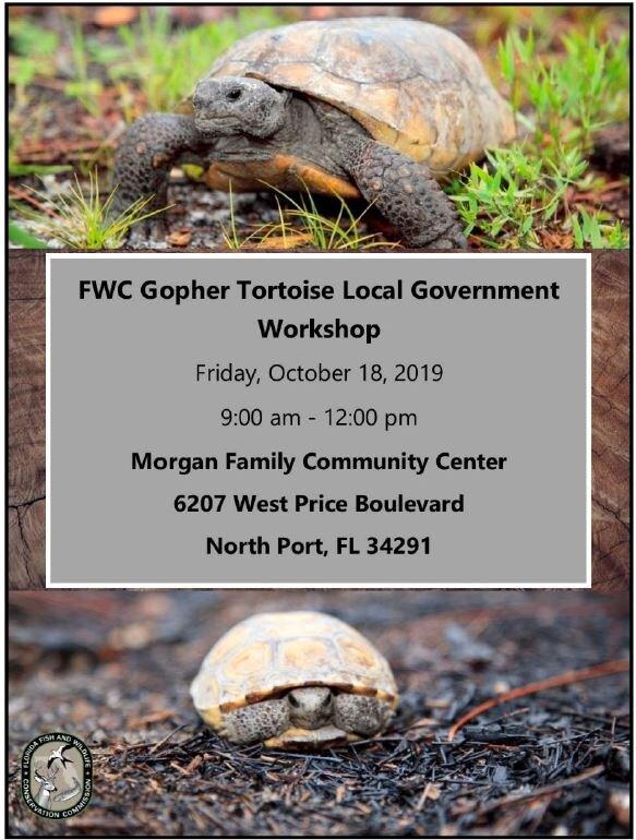 Local Govt_Tortoise.JPG