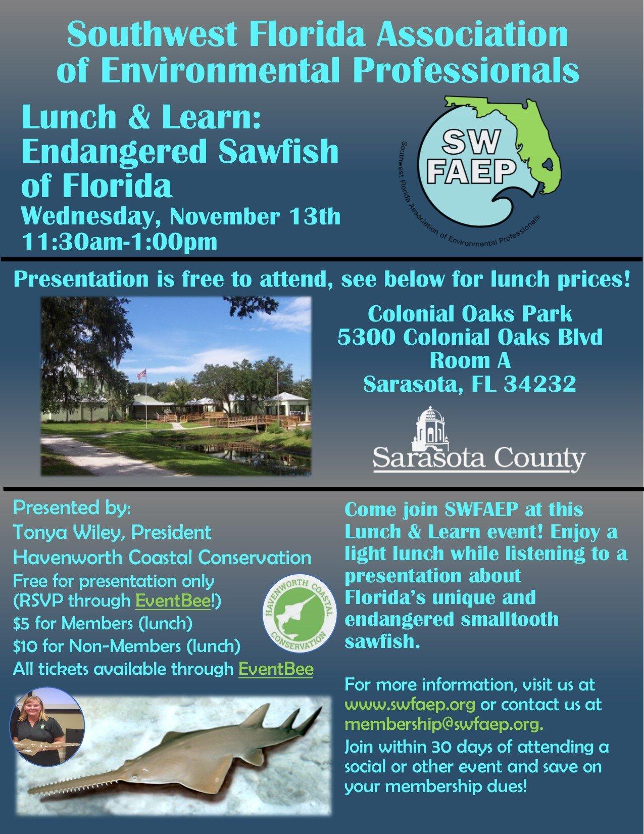 Sarasota Sawfish Nov 13.jpg