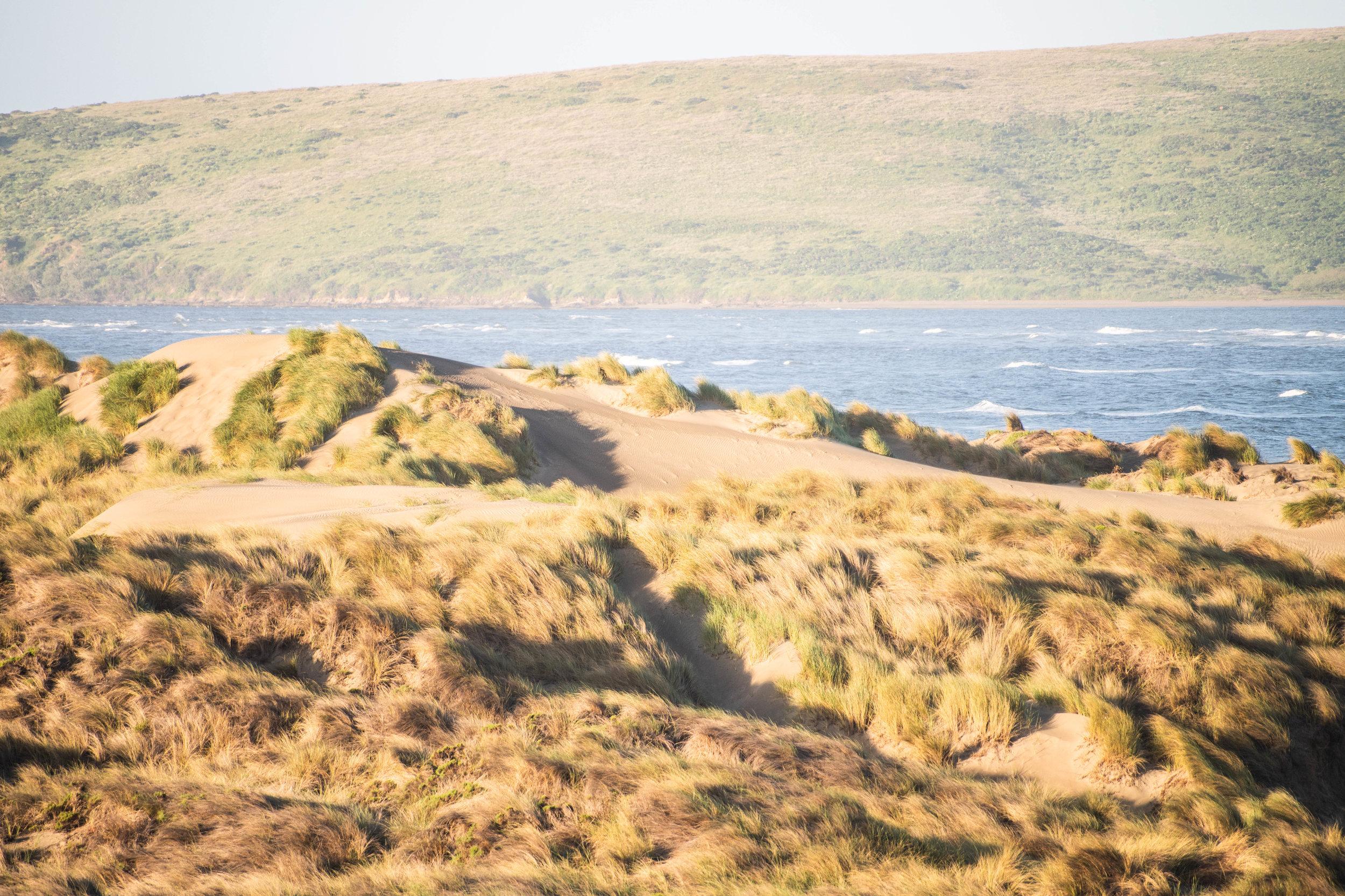 dunes (1 of 1).jpg
