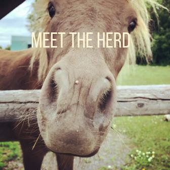 meet herd.png