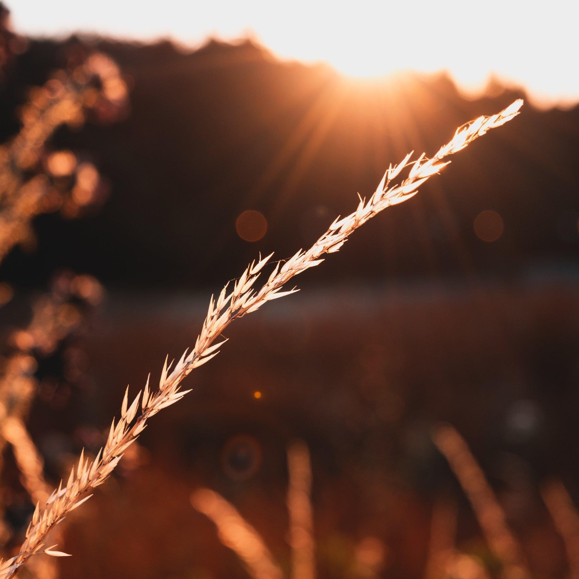 blur-cereal-close-up-1272364.jpg