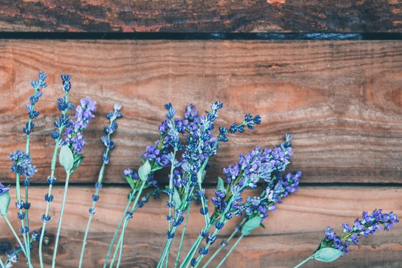 Learn about the Medical & Ecological Properties of Lavender - 2 p.m. - 3 p.m. FREEThis engaging talk will be presented by Anne Marie Beauchemin, owner of East Bay Herbals. Learn the about the magical properties found within lavender.